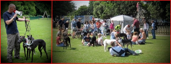 organising a greyhound walk